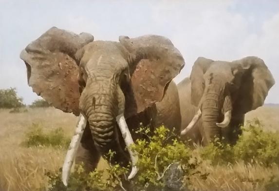 sojin--elephants
